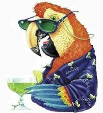 Parrot with margarita
